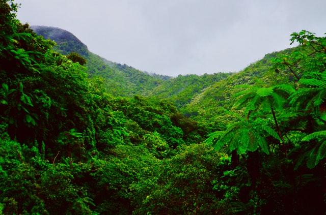 Plant et træ i regnskoven